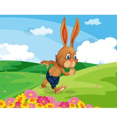 Rabbit in field vector image