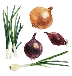 Watercolor set of vegetables Onions vector