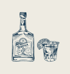bottle tequila glass shot with lime and label vector image