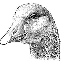 Head a goose vector
