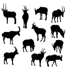 Set of antelopes vector