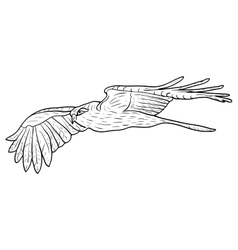 Sketch beautiful eagle on a white background vector image