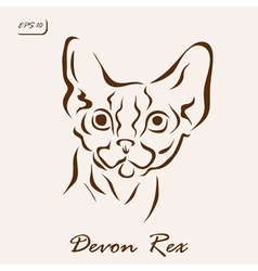 Devon Rex vector