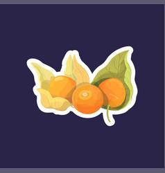 fresh juicy physalis sticker tasty ripe exotic vector image
