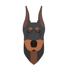 Isolated doberman avatar vector