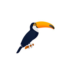 toucan in flat design tropical bird vector image