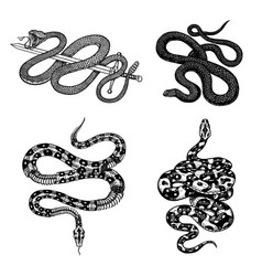 vintage snake set royal python milk reptile with vector image