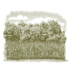 Woodcut Corn Plants vector