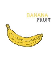 hand drawn banana fruit isolated on white vector image