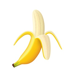 Object banana vector