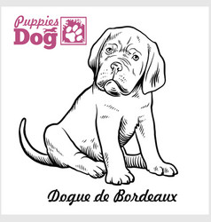 Dogue de bordeaux puppy sitting drawing hand vector