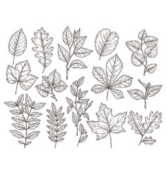 hand drawn forest leaves autumn leaf sketch vector image