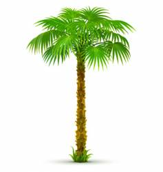 tropical landscape vector image
