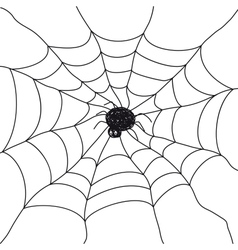Spider on white background vector image vector image