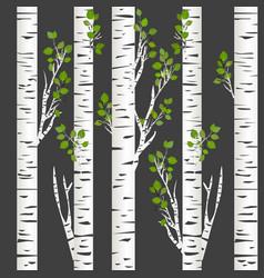 birch trunks in night vector image