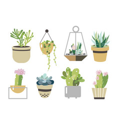 succulent and cactus set collection in flat style vector image