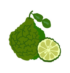 bergamot with slice flat design bergamot isolated vector image vector image