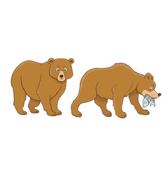 cartoon bear set standing and catching fish vector image