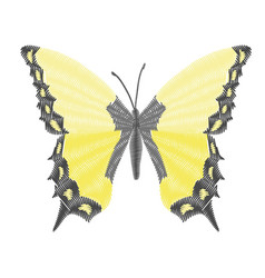 embroidery butterfly design for clothing insect vector image
