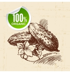 Hand drawn sketch vegetable green cucumber Eco vector image