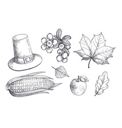 maple leaves and corn maize sketches set vector image