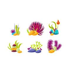 Set compositions with various sea algae corals vector