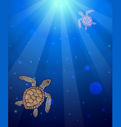Underwater sea scene with two marine turtles vector