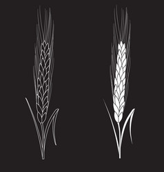 black ang white wheat isolated on black background vector image