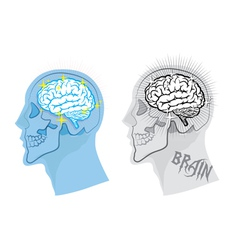 bright brain in skull vector image