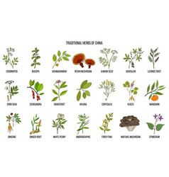 Chinese traditional medicinal herbs vector