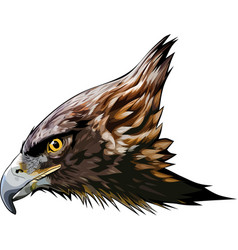 Eagle head2 vector