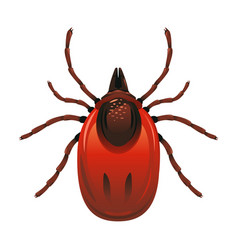 mite isolated vector image