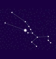 taurus constellation starry night sky zodiac sign vector image