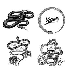 Vintage snake set royal python with skull vector