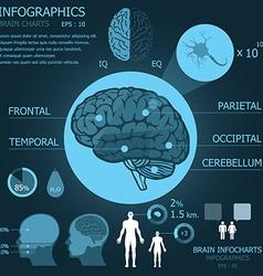 Brain Infocharts vector image