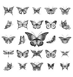 Butterflies graphic vector
