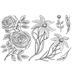 flowers set roses with leaves and buds and lily vector image