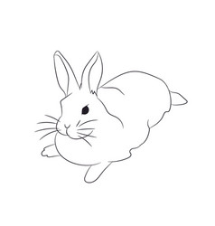 hare lies lines vector image