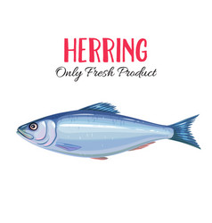 Herring i vector