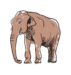 indian elephant hand drawn icon vector image