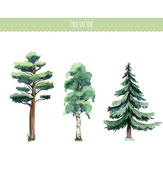 Set of watercolor trees birch pine fir-tree vector