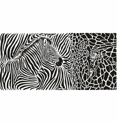 animal background with zebra and giraffe motif vector image