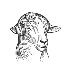 sheep animal in headphones engraving vector image