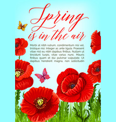 spring poster of poppy flowers bloom vector image
