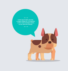 cute french bulldog dog with chat bubble speech vector image