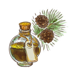 Pine tar in a bottle with branch watercolor vector