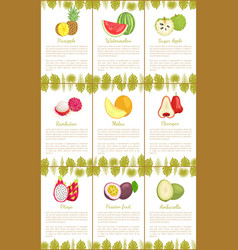 pineapple watermelon sugar apple rambutan melon vector image