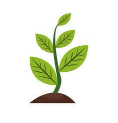 Plant sapling growing natural botanical image vector