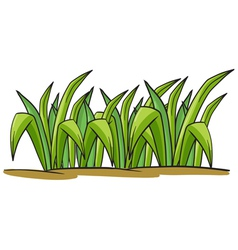 A grass vector