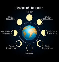 earth and lunar phase set vector image